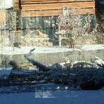 Eisvogel im Garten
